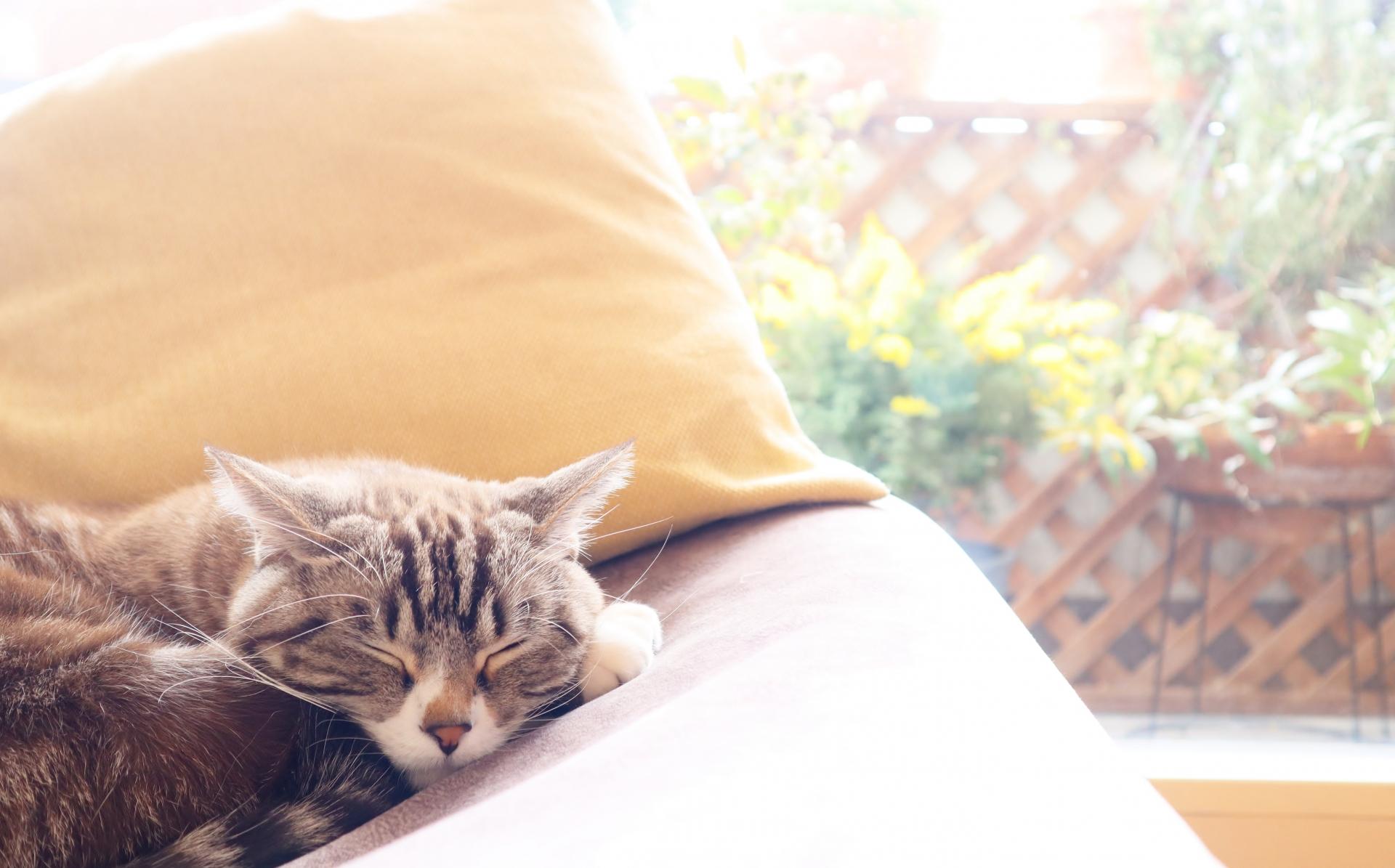睡眠がメンタルヘルスに及ぼす影響とは?